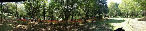 昭和記念公園201209-8