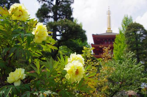 高幡不動尊201205-13
