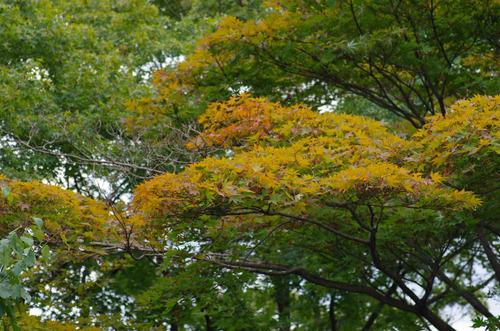 京王百草園201109-11