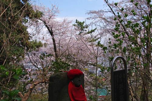 高幡不動尊桜201004-5