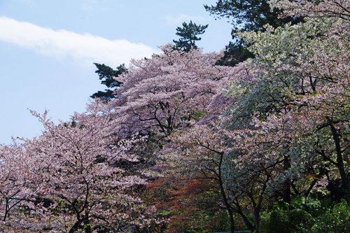 高幡不動尊201004-5