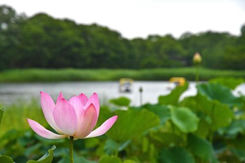 昭和記念公園201606-10