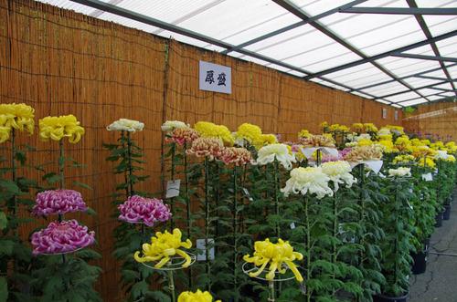 高幡不動尊201210-4