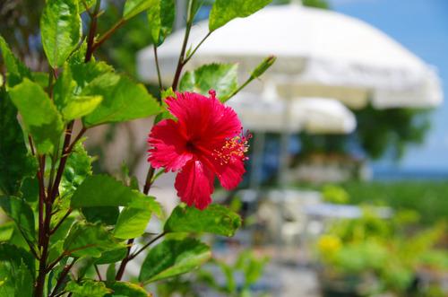 沖縄20110801-11