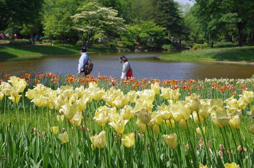 昭和記念公園201405-12