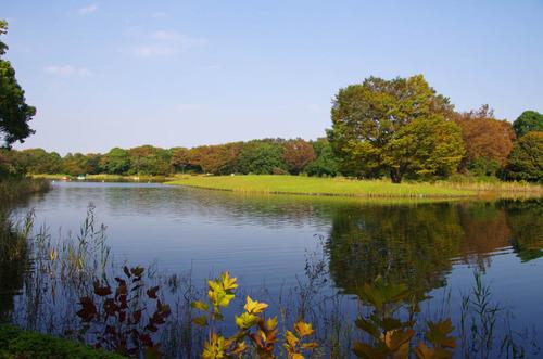 昭和記念公園201110-11