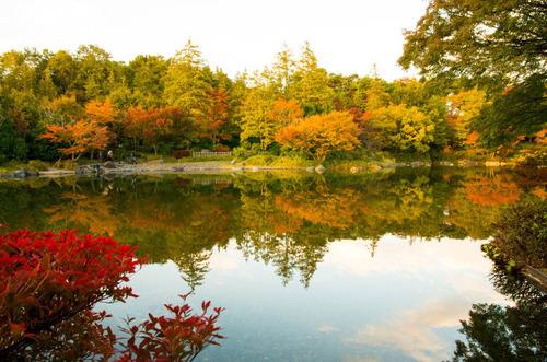 昭和記念公園201311-9