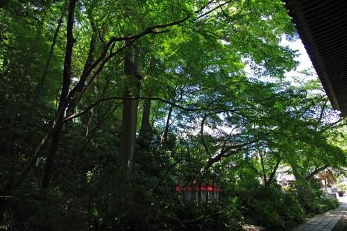 高幡不動尊20100807-6