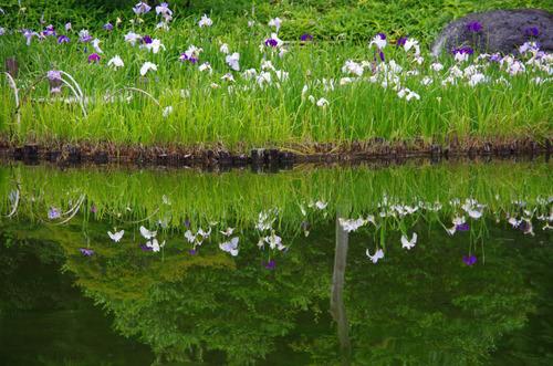 昭和記念公園201306-12