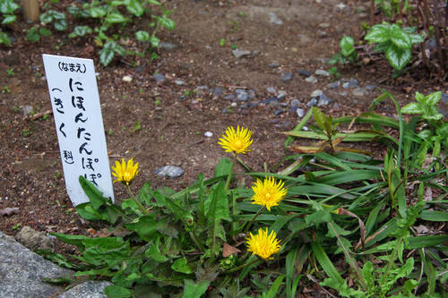 高幡不動尊春201004-1