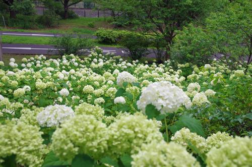 昭和記念公園201407-2