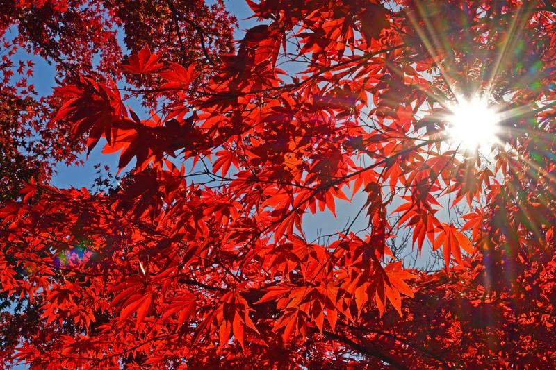 京王百草園紅葉まつり2017