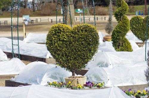 昭和記念公園201212-2