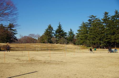 昭和記念公園201312-14