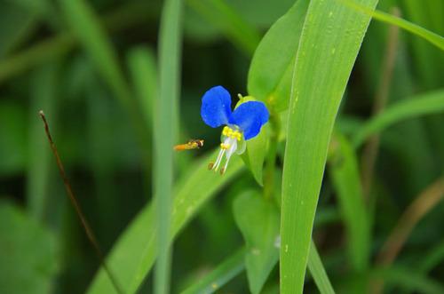 河川敷の花201207-4