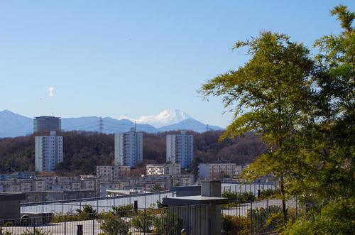 京王百草園201201-8