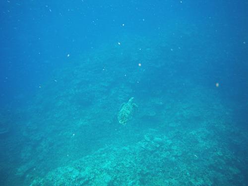 西表島バラス島201008-4