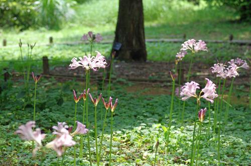 昭和記念公園201408-13