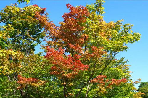 昭和記念公園201409-1