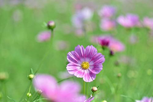 昭和記念公園201509-5