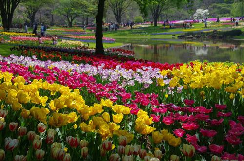 昭和記念公園20120428-12
