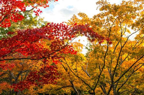 昭和記念公園201311-6