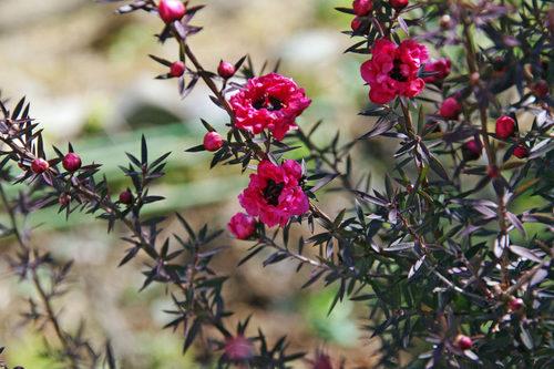 散歩道の花201001-2