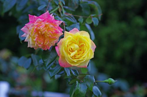 神代植物公園201210-11