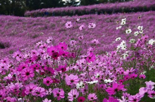 昭和記念公園201211-8