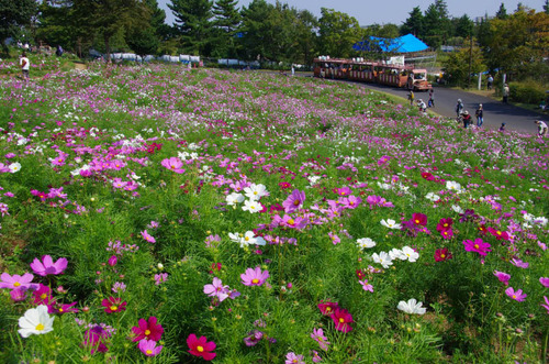 昭和記念公園201110-8