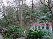 高幡不動尊090110-3
