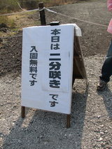 富士芝桜入園無料